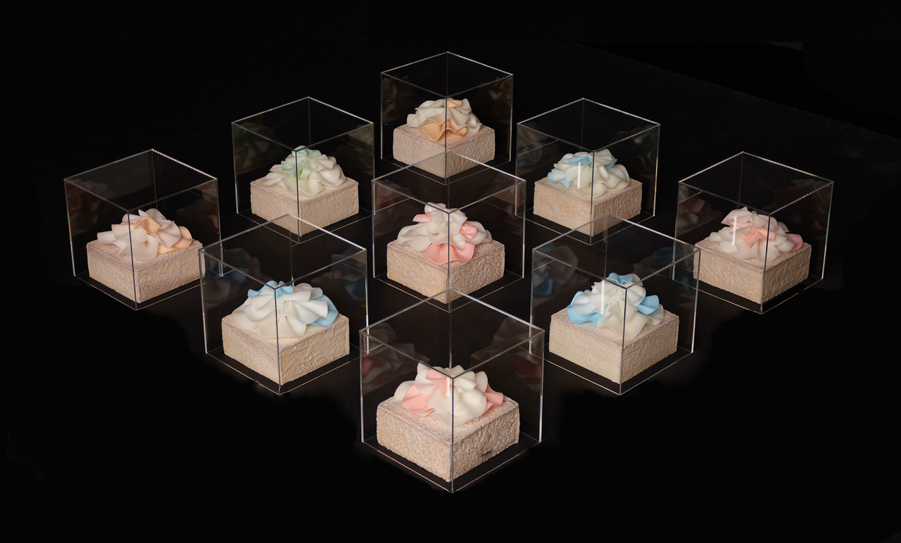 Wax models of sea creatures encased in clear glass