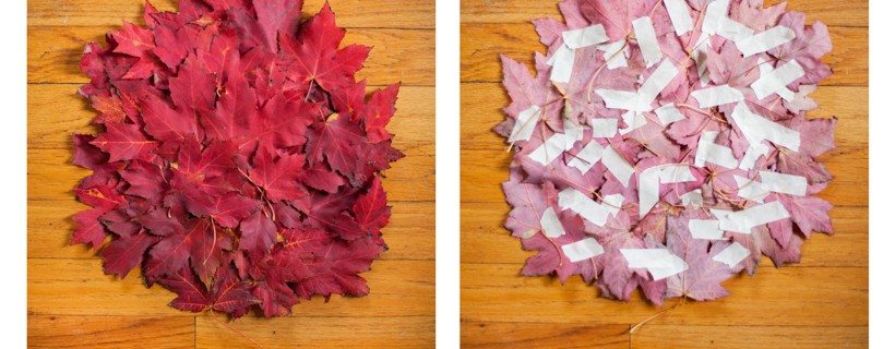 two images of pile of leaves on floor one pile is flipped to reveal tape