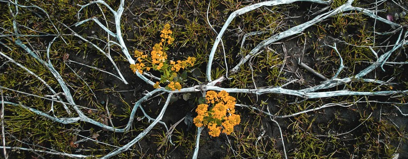 Birds eye view of tree roots on ground with yellow flowers
