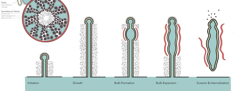 illustration of microscopic growth